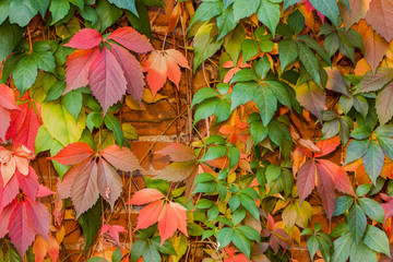 Colorful autumn leaf background