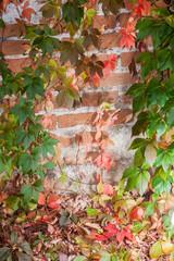 Colorful autumn leaf background