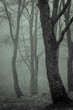 Trees in the forest drenched by fog