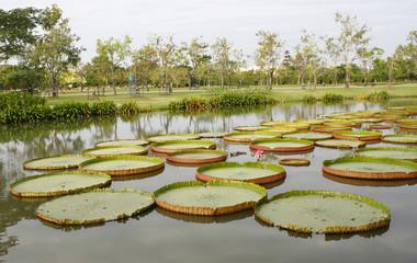 Outdoor landscape garden with pond