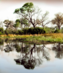 African delta water reflection