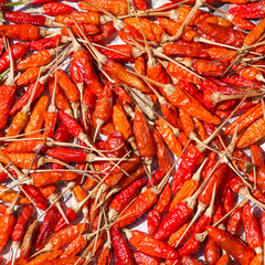 Red dry chilli pepper close-up