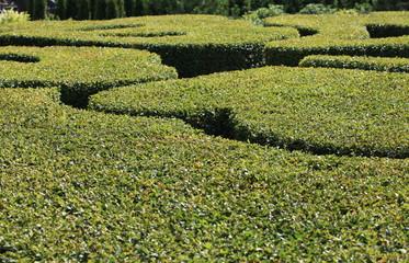 abstract green background regular garden