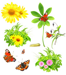 Collection of green leaves, flowers and insects