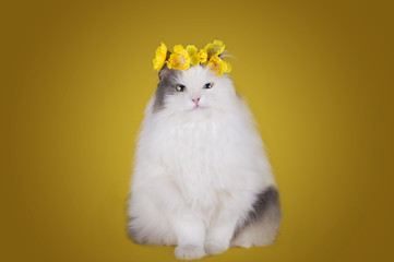 cat in a dress and a wreath of tsetov on a yellow background