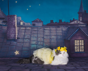 cat in a dress and a wreath of tsetov on the roof at night