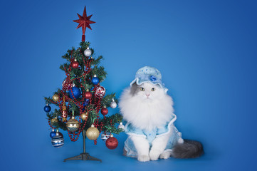 cat in a blue dress and hat on a blue background