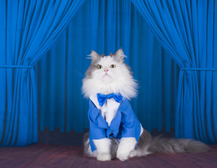 cat in a dark blue jacket and tie on stage