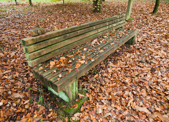 Wooden bench in autumn