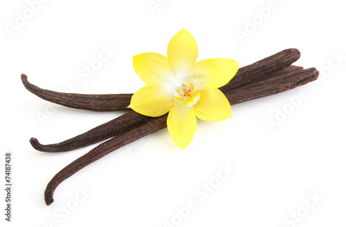 Vanilla pods and flower isolated - 74187438
