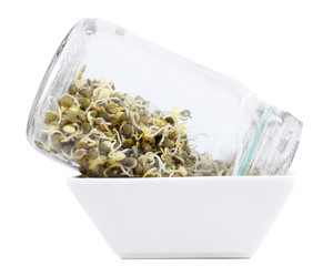 sprouting green lentils in jar