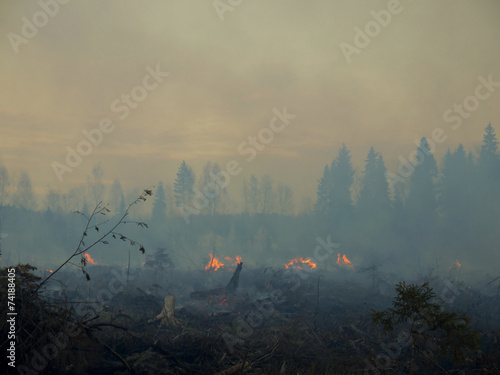 Foto op Aluminium Vuur / Vlam wildfire 004