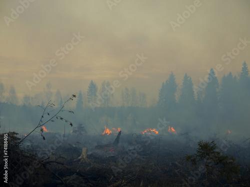 Fotobehang Vuur / Vlam wildfire 004