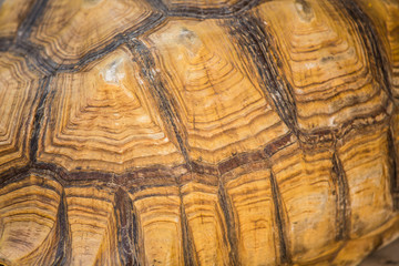 Turtle shell texture