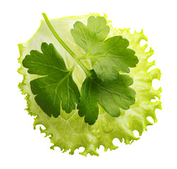 Lettuce leaf isolated