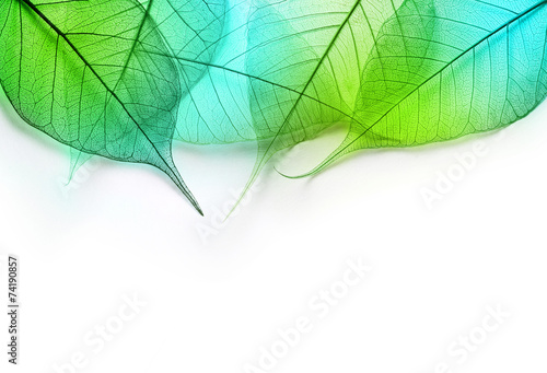 Macro green leaves