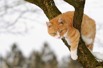 Rote Katze im Baum
