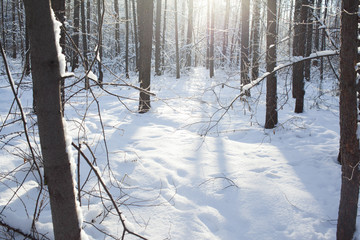 winter background of snowy forest