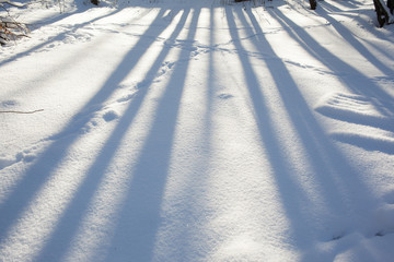 white snow surface with tree shadows