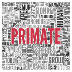 PRIMATE Concept Word Tag Cloud Design