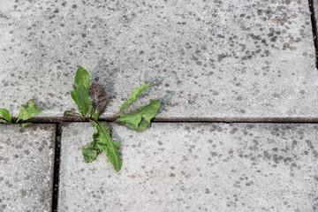 Pflanzen und Steine