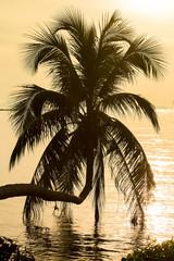 Coconut palm tree silhouette at sunset. Koh Phangan, Thailand