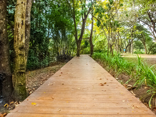 Wooden footpath in park