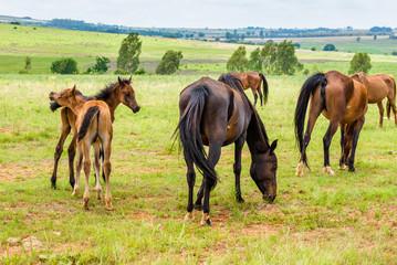 Horses, South Africa. November 2014.