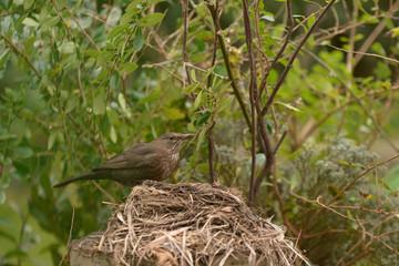 faire son nid