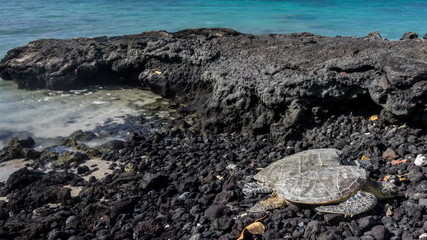 Hawaiian Green Sea Turtle Time Lapse