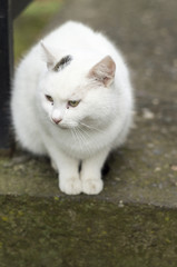 White cat with black speckles looking at something