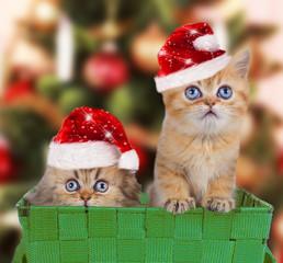 Perserkätzchen mit Weihnachtsmütze