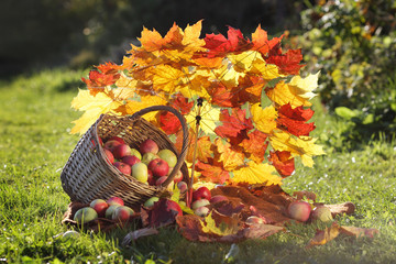 autumn still life with apples, basket and umbrella of maple leav