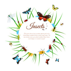 Insects Background Illustration
