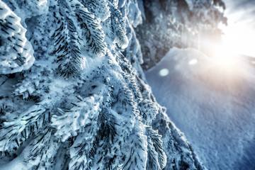 Beautiful winter forest background