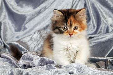 Kleine Katze auf Tuch