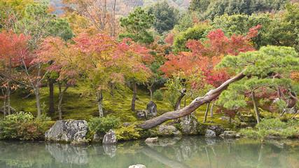 Japanese fall garden