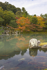 Autumn lake with carp fish