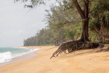 Strand mit Baumwurzel