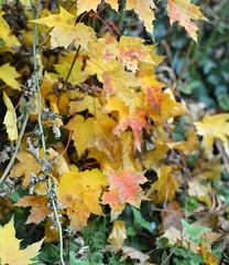 feuilles morts d'automne