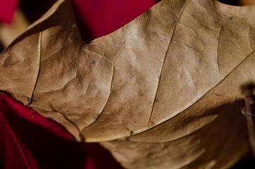 Crisp Dried Leaf in Autumn