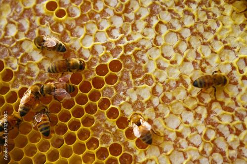 Foto op Plexiglas Bee Honey Bees in their Hive