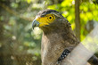 ������, ������: Serpent eagle face at wildlife domestic station in Thailand