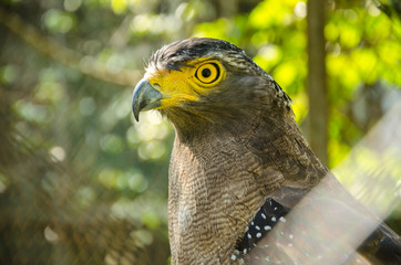 Serpent-eagle face at wildlife domestic station in Thailand