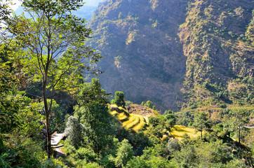 Непал, лесистая часть Гималаев