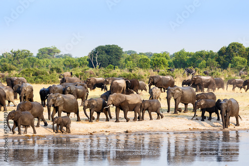 Tuinposter Olifant A herd of African elephants drinking at a muddy waterhole