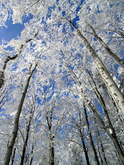 Winter snow covered tree twigs on blue sky background