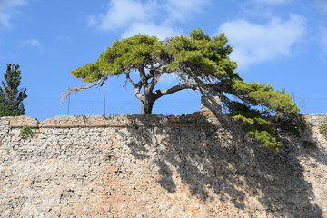 Baum auf einer Mauer
