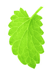 one isolated green mint leaf