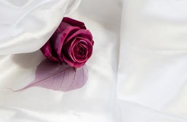 rose fleur de mariée
